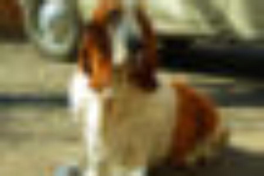FERA LIBENS – LOVE ANIMALS, ENJOY LIFE Nasce FERA LIBENS, un nuovo concetto di scarpa realizzata senza l'impiego di componenti di origine animale
